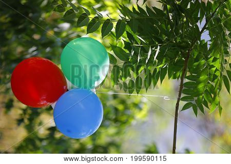 Balloons in the garden among the tress an leaves