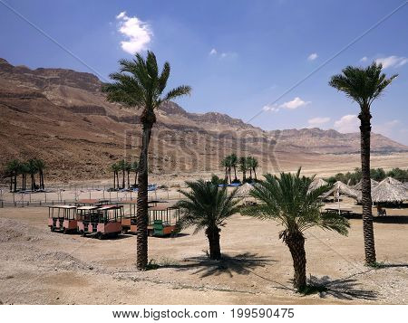 A hot desert. Against the backdrop of the sandy mountains and the blue sky is a green man-made oasis. It is an island of relaxation and enjoyment of SPA Ein Gedi.