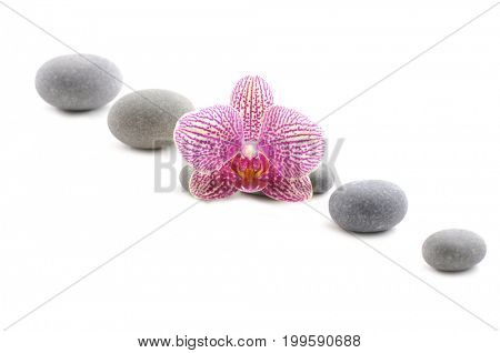 Pink orchid with gray stones