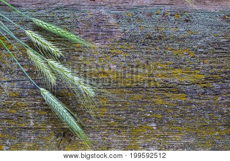 Ears of wheat on an old wooden surface rustic background space for text