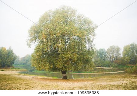 Autumn river. A solitary tree on the shore of a river in autumn.Misty morning on the beach of a river in autumn.