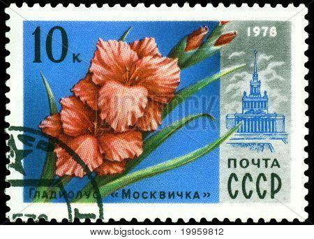 Vintage  Postage Stamp.  Gladiolus