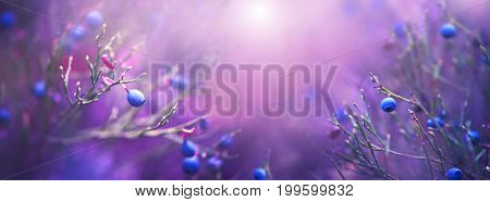Autumn blueberries art design. Juicy and fresh wildberry growing in forest. Blueberry nature violet bright background. Organic Bilberry closeup. Antioxidant. Concept for healthy eating and nutrition