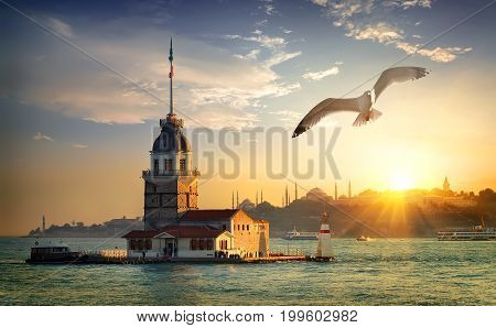 Seagull fliying near Maiden's Tower in Istanbul at sunset, Turkey