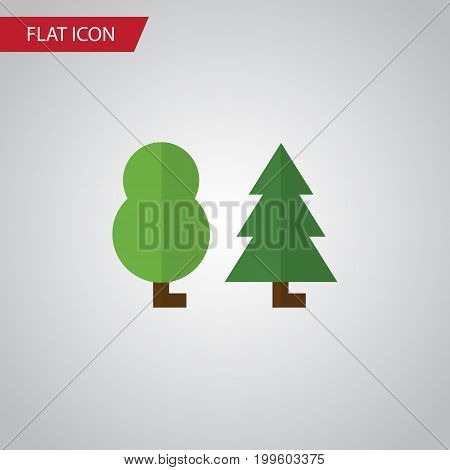 Forest Vector Element Can Be Used For Tree, Wood, Forest Design Concept.  Isolated Tree Flat Icon.