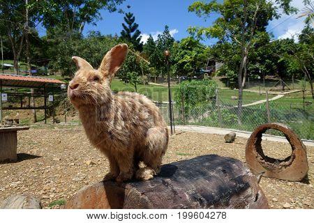Cute Rabbit In Outdoor