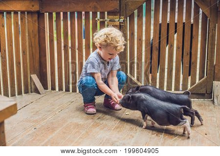 Toddler Girl Caresses And Feeds Pig Piglet In The Petting Zoo. Concept Of Sustainability, Love Of Na