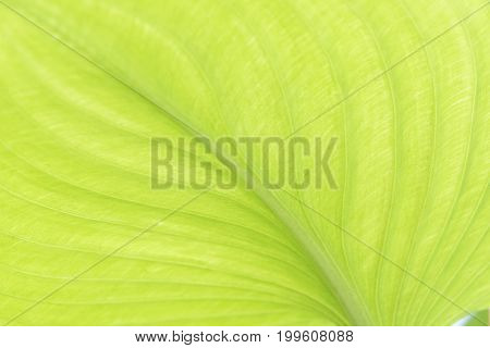 Macrophotography the texture of beautiful green leaf