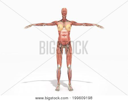 A Female Body Anatomy For Books 3D Render On White