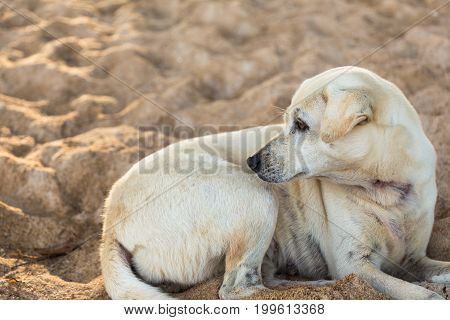 stray dog sits alone on sandy beach room for text or copyspace good background for animal welfare