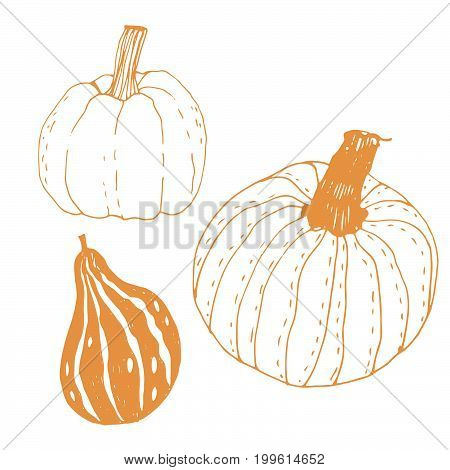 Seasonal autumn vegetables. Hand drawn vector set. Pumpkins