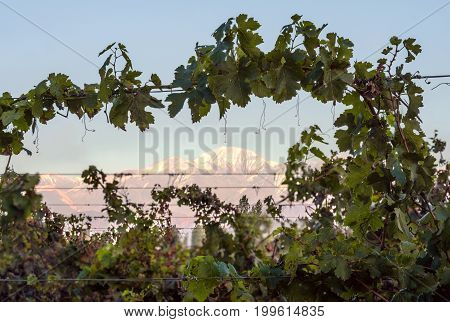 Volcano Aconcagua and Vineyard. Aconcagua is the highest mountain in the Americas at 6962 m (22841 ft). It is located in the Andes mountain range in the Argentine province of Mendoza