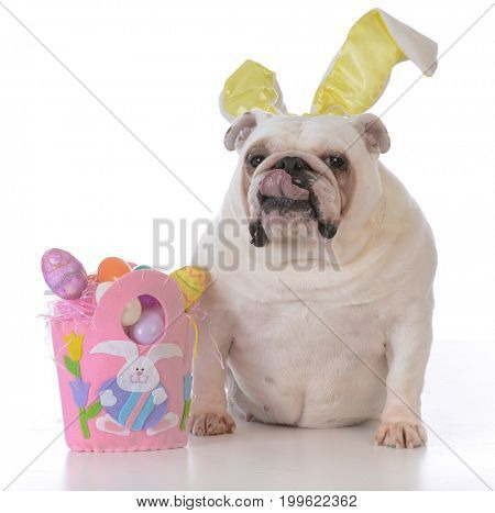 dog dressed up for easter with funny expression