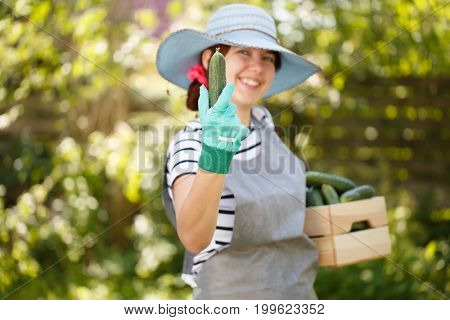 Agronomist in hat holds cucumber