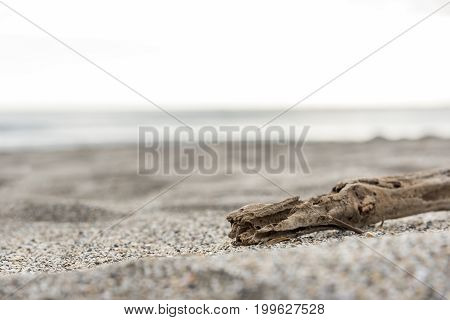 Timber wood on the beach sand near the sea selective focus on timber wood Sea and Relax concept