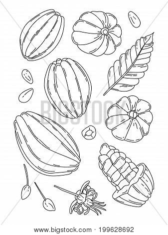 Cocoa fruit doodle vector illustration set Hand drawn tropical cacao fruit leaf seed and flower isolated on the white background