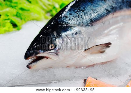 King salmon on ice in supermarket, close-up of head, toned image