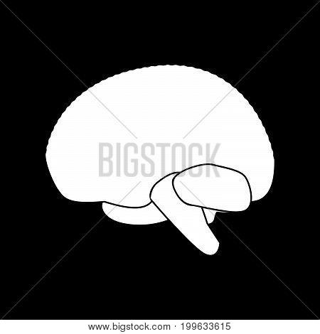 Brain White Color Icon .