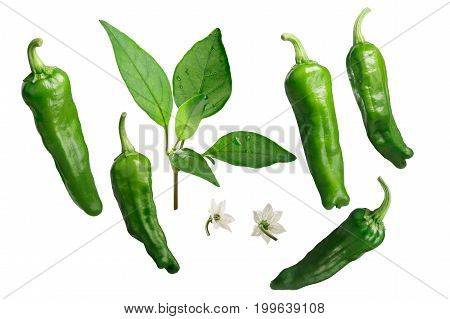 Shishito Peppers As Elements, Paths For Each