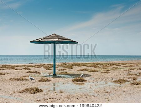 The Parasol And Two Seagulls On Empty Sandy Beach