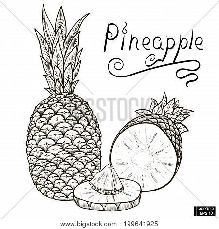 Sketch Of Pineapple, Sectional View.