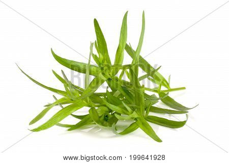 tarragon isolated on a white background. Artemisia dracunculus.