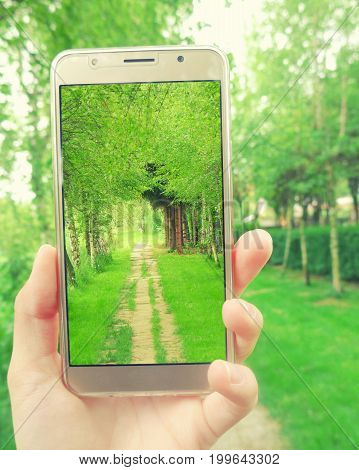 Hand with a smartphone taking a photo of a lane going through a beautiful arch alley of birth-trees