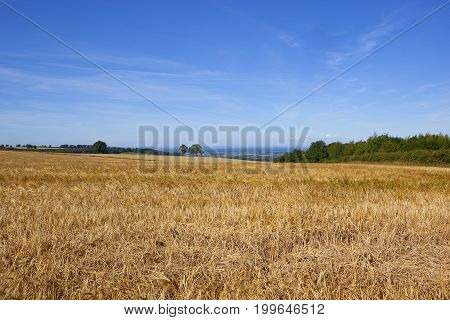 Scenic Golden Barley Field