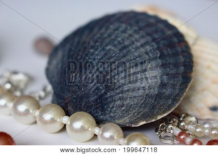 Blue shell and string of white pearls on light background
