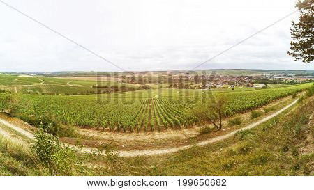 Winemaking in France well-groomed fields in which rows grows grapes panorama