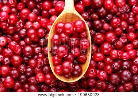 Ripe cranberries in a spoon and on a lot of cranberries scattered background