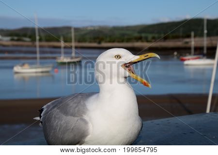 A Seagull in a harbor with boats in the background
