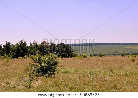 Meadows and fields in the summe, Ukraine