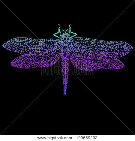 Dragonfly, beautiful winged insect, bright blue violet color outline, isolated on a black background. Vector detail, hand drawn illustration.