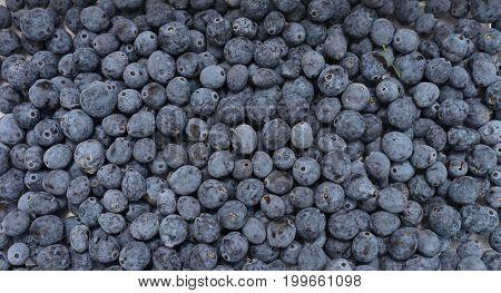 Mahonia aquifolium plant berries fruits texture pattern