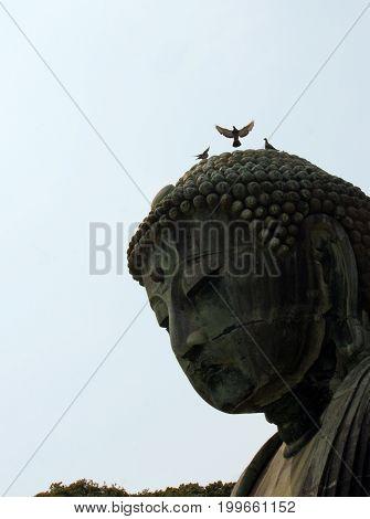 Bird flies from Buddha's head in Kamakura, Japan