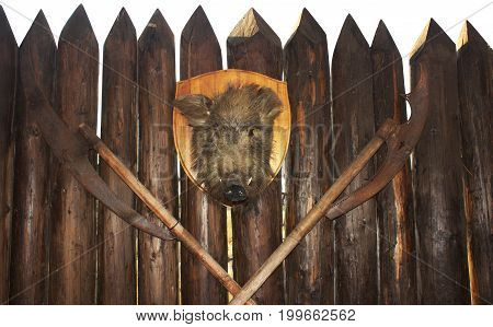 Wild boar's head and two old Russian axes hanging on the wooden fence photo.