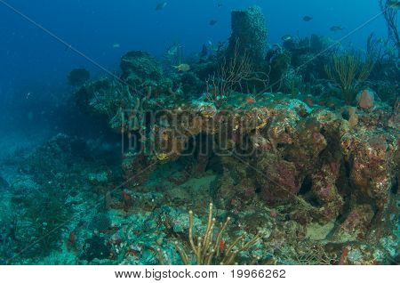 Coral Ledge Compositonpicture taken in south east Florida. poster
