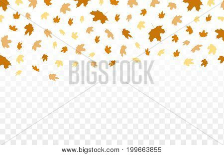 Autumn falling leaves pattern on transparent background. Vector autumnal foliage fall of maplefor autumn design