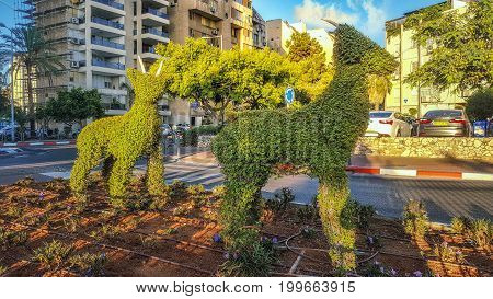 Two Cute Topiary Goats Standing In Sunrise Light