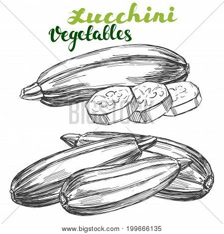 zucchini vegetable set hand drawn vector illustration realistic sketch