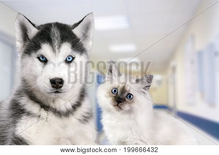 Pets at the veterinary clinic. Dog and cat in front of the blurred hospital background.
