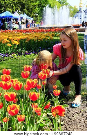 The older sister teaches the younger to smell tulips on the city flowerbed. Children smell tulip on a city flowerbed