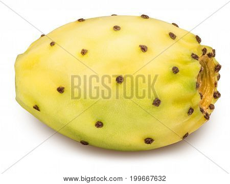 Yellow opuntia isolated on white background with clipping path