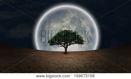 Surrealism. Green tree in arid land. Full moon in night sky.     Some elements courtesy of NASA     3D rendering