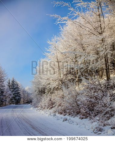 The ski track passes on  way to the snow-covered wood. Bright and solar Christmas morning