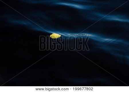 Yellow leaf in waves on the watery surface of the lake