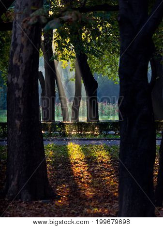 First rays of an early morning light in Topcider park, Belgrade, Serbia