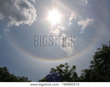 Tree Branches With Green Leaves And Blue Sky With Sun Halo