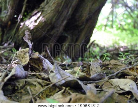 Dead Leaves Under Old Tree Close Up